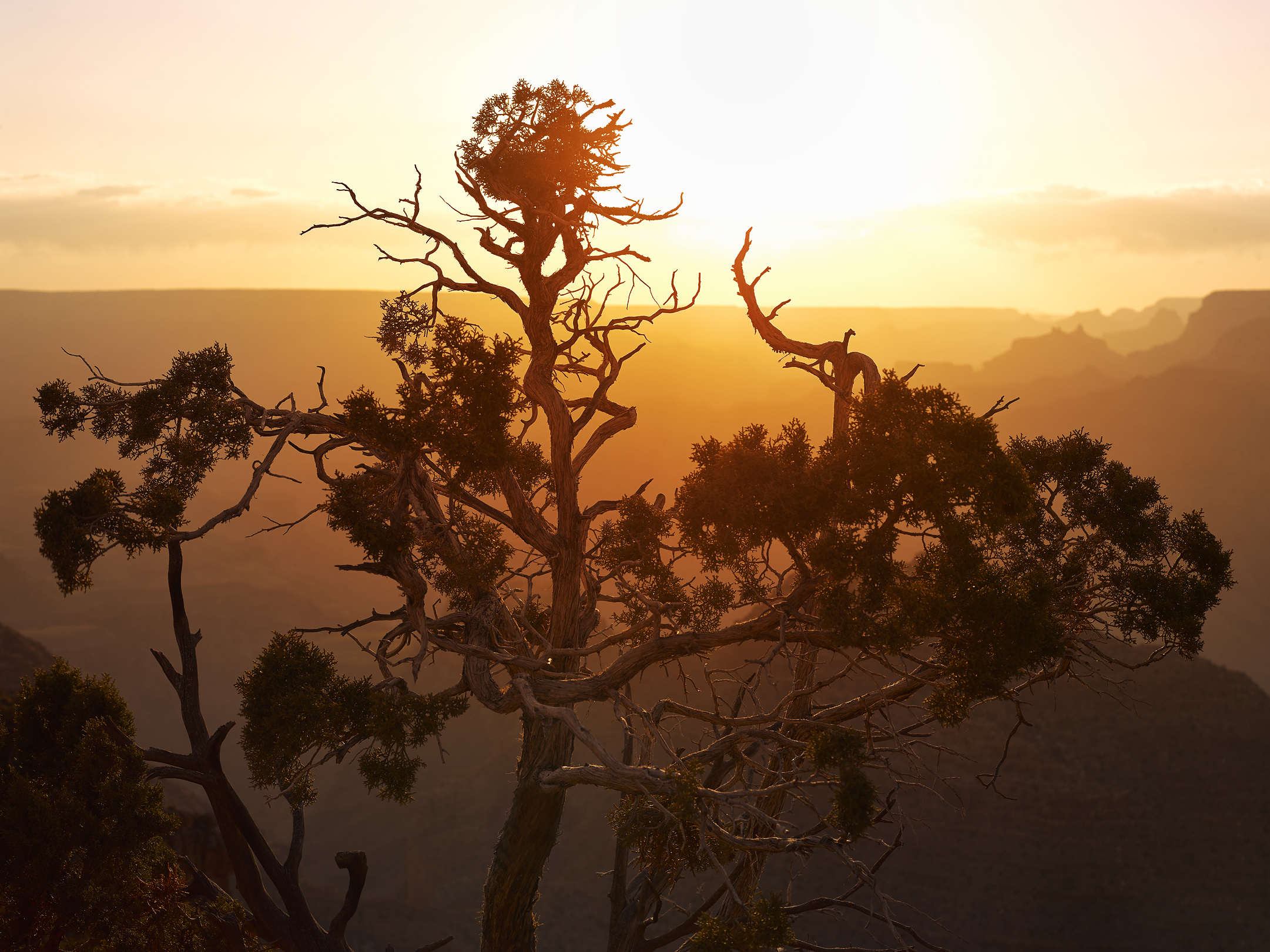 photo of a juniper tree at sunset at the grand canyon arizona. Arizona landscape photography by Travis Neely